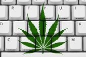pic of marijuana  - Computer keyboard keys with marijuana leaf symbol Searching for marijuana information - JPG