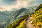 pic of coniferous forest  - mountain landscape with a path at summer sunset - JPG