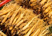 stock photo of ginseng  - Ginseng root stick - JPG