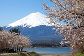 foto of mount fuji  - Mountain Fuji in spring  - JPG