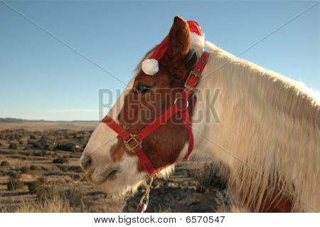 Merry Christmas from a horse