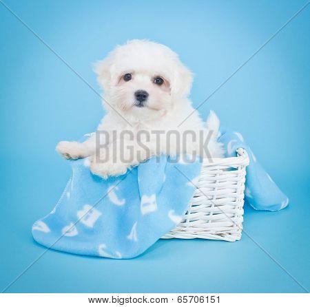 A B C Puppy