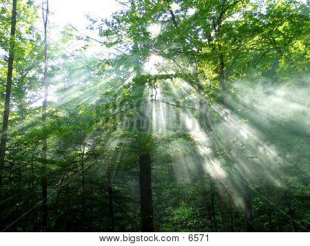 Luz solar del bosque