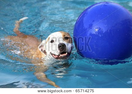 Dog swimming with ball