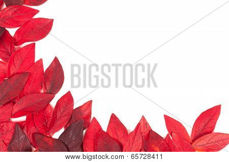 Tree Leaves Isolated On White Background