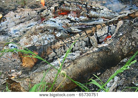 The Remains Of A Campfire