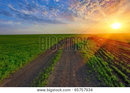 rut road on green field on sunset background