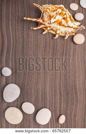 Light Pebbles And Big Shell On Wooden Ebony Background