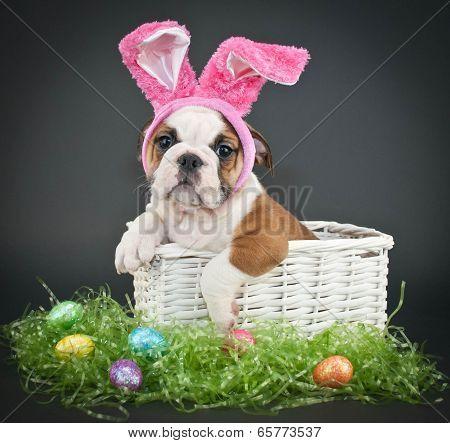 Easter Bulldog
