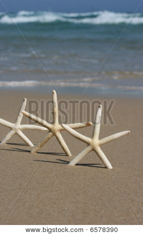 Three Starfish on on the beach