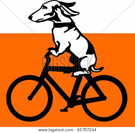 Dog Riding a Bicycle