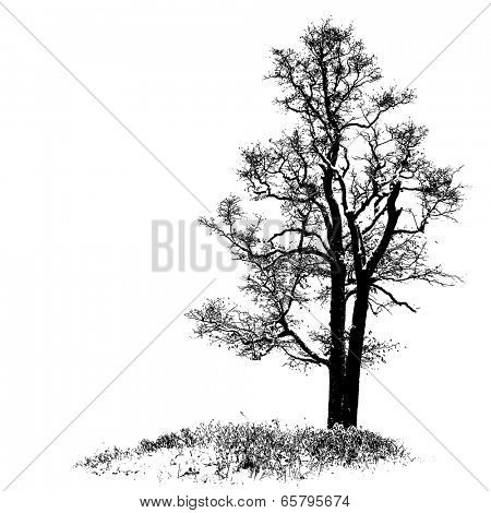 Oak full size tree silhouette over grass, vector