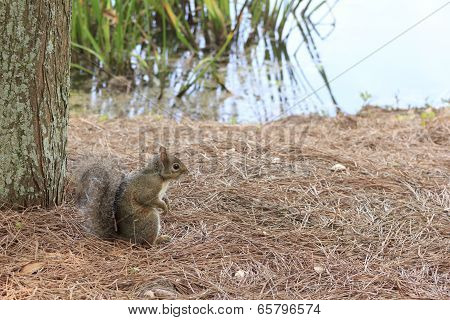 Squirrel sitting in the brush along pond