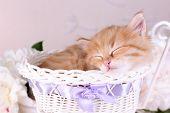 pic of orange kitten  - Cute little red kitten  sleeping in decorative basket - JPG