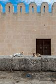 foto of fortified wall  - Fortified Wall around Tunsian Old Town with Cats