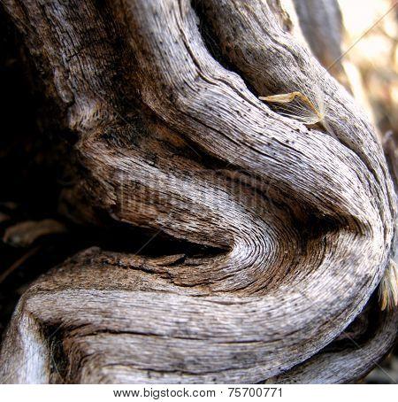 twisted dried sagebrush wood