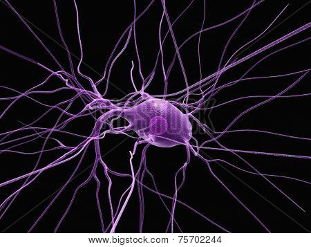nerve cell