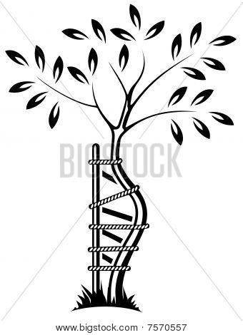 The symbol of orthopedics