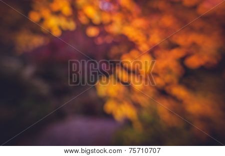 Diffused autumn colors