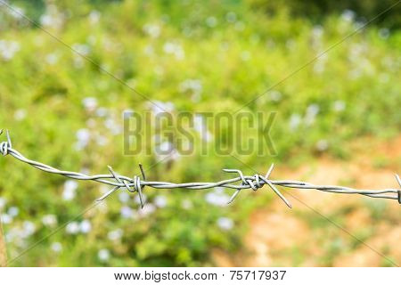 Barb Wire Before The Green Field