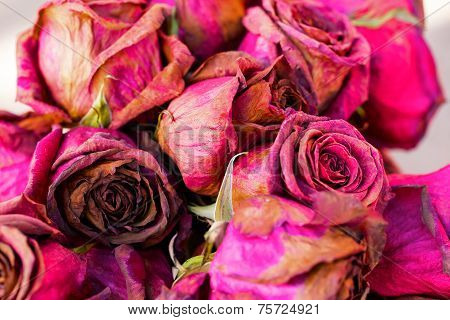 Bouquet Of Dried Roses