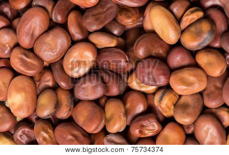 Dried brown fava beans or broad beans, an important ingredient in Middle Eastern cooking, where they are used both for Egyptian foul meddames and to make a bean paste, among other things.