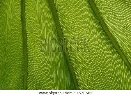 Green Leaf Texture 05