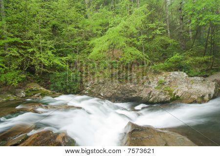 Rapids On Forest Stream