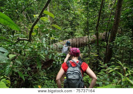 Tourists hiking in the deep jungle of the Khao Yai national park in Thailand deep jungle