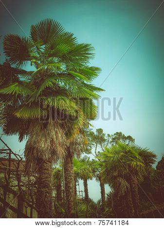 Retro Look Palm Tree