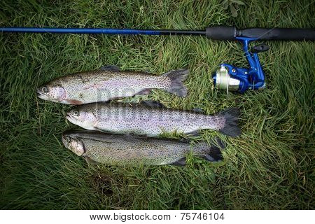 Rainbow trout and fishing pole