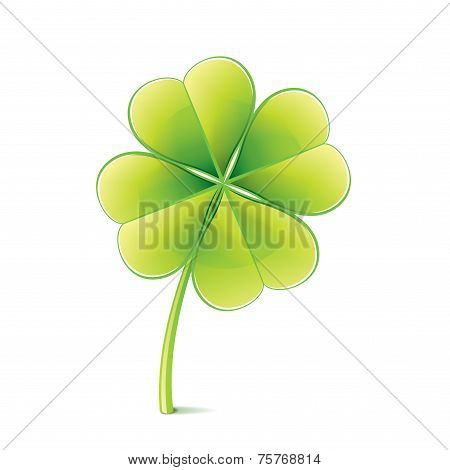 Clover Leaf Isolated On White Vector