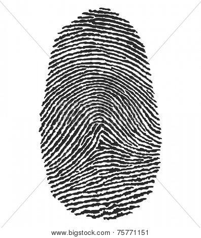illustration of a human fingerprint