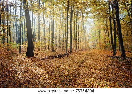 Sunny forest  in autumn