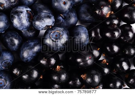 Macro Closeup View Group Fresh Blueberries And Blackcurrants Background