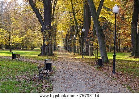 Autumn in the park.