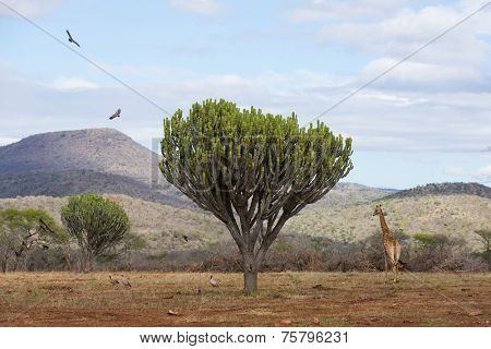 beautiful african scenery with wildlife
