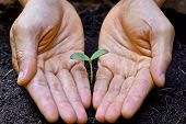 picture of nurture  - hands holding and nurturing a young green plant - JPG