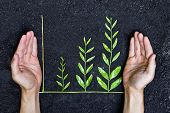 image of sustainable development  - Hand holding tree arranged as a green graph on soil background  - JPG