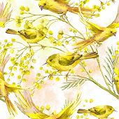image of mimosa  - Seamless Spring Pattern with Watercolor Sprig of Mimosa and Yellow Bird - JPG