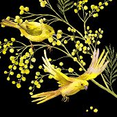 image of mimosa  - Sprig of Mimosa and Yellow Bird - JPG