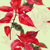 picture of poinsettia  - Seamless pattern  with poinsettia plant - JPG