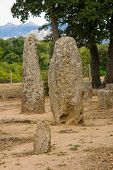 pic of megaliths  - The menhirs alignment of Renaggiu in the megalithic site of Cauria Sartene area Corsica France - JPG