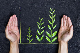 pic of sustainable development  - Hand holding tree arranged as a green graph on soil background  - JPG
