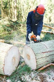 picture of man chainsaw  - Lumberjack logger worker in protective gear cutting firewood timber tree in forest with chainsaw - JPG