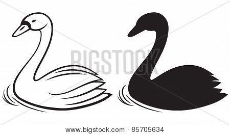 Swans on pond