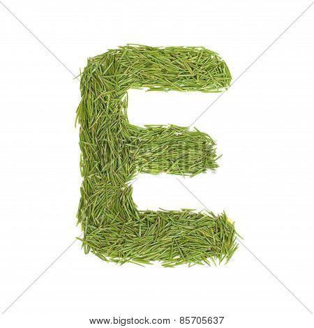 Green Alphabet, Letter E