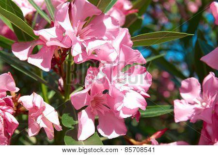Pink Flower's Branch