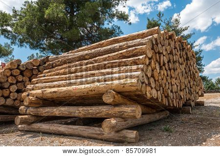 Log Stacks In The Forest, Turkey