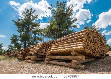 Raw Pine Wood Logs, Turkey